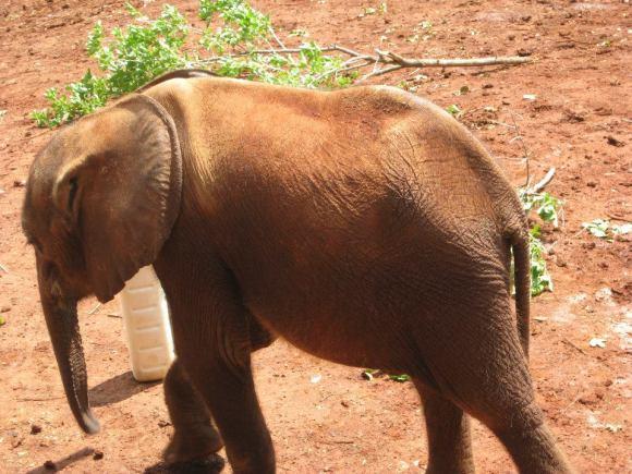 ElephantOrphanage